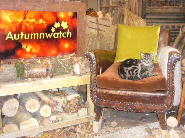 Cat on Autumnwatch set
