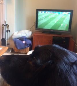 Football_dog